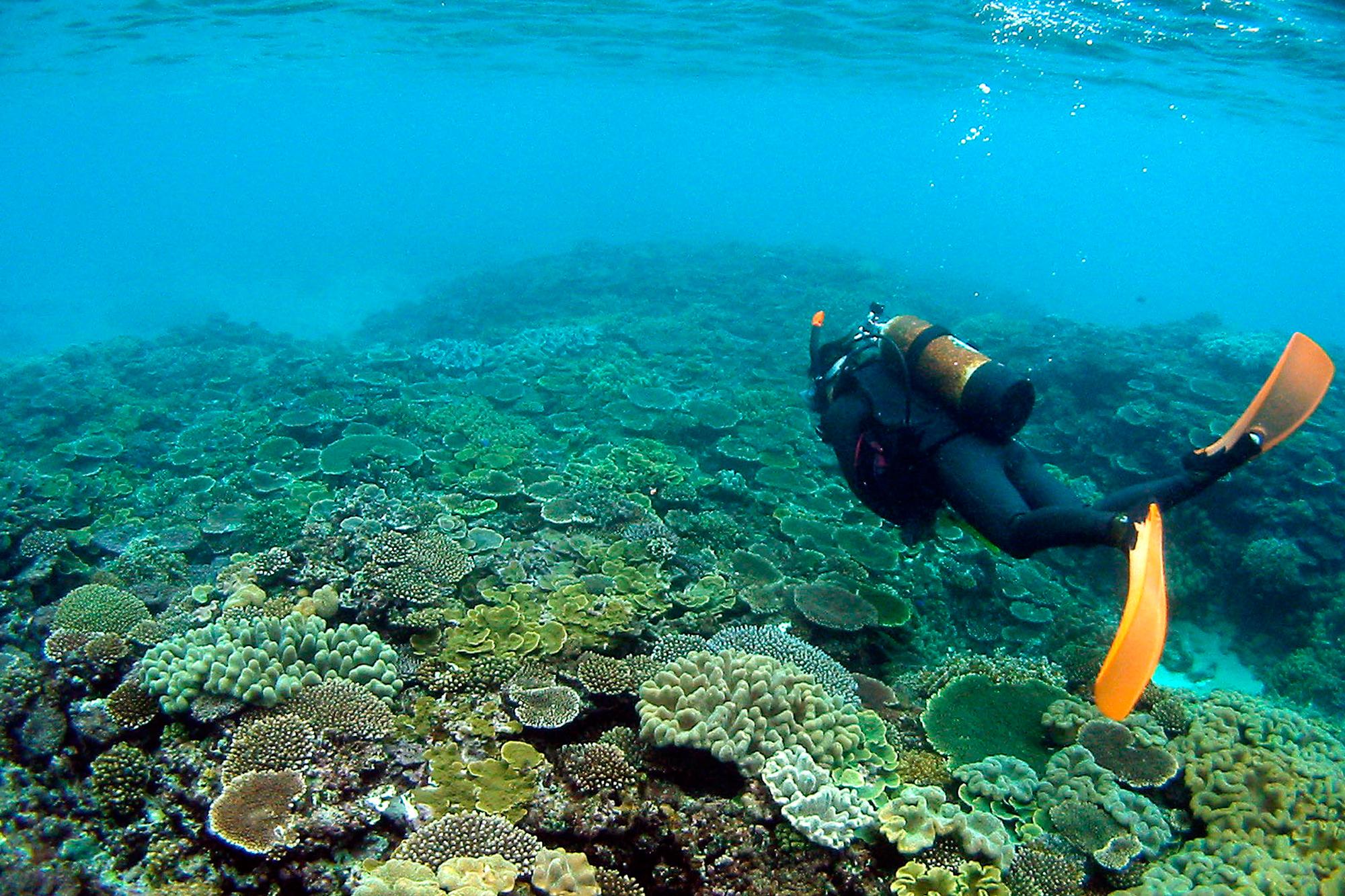 プライベートビーチでの珊瑚